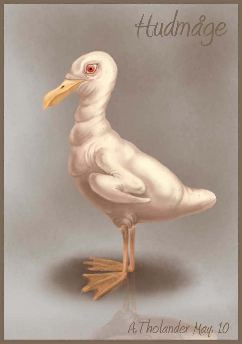 Naked seagull